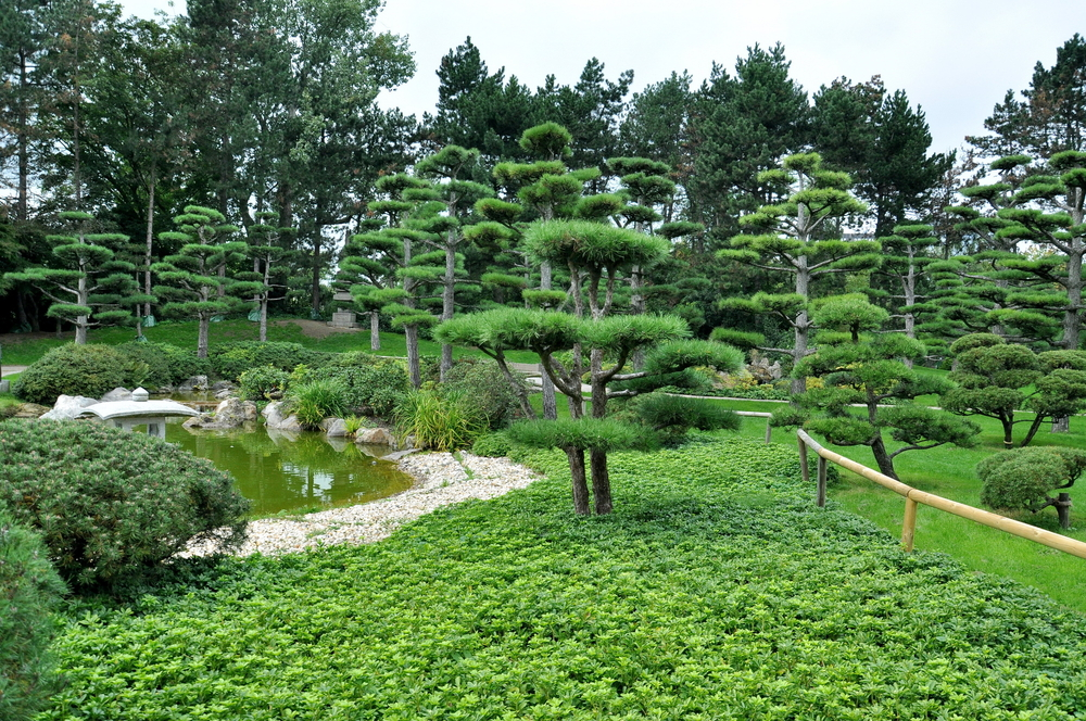 Japanese garden in Dusseldorf