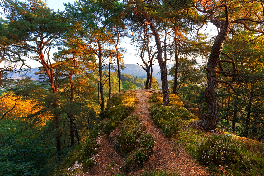 The Palatinate Forest