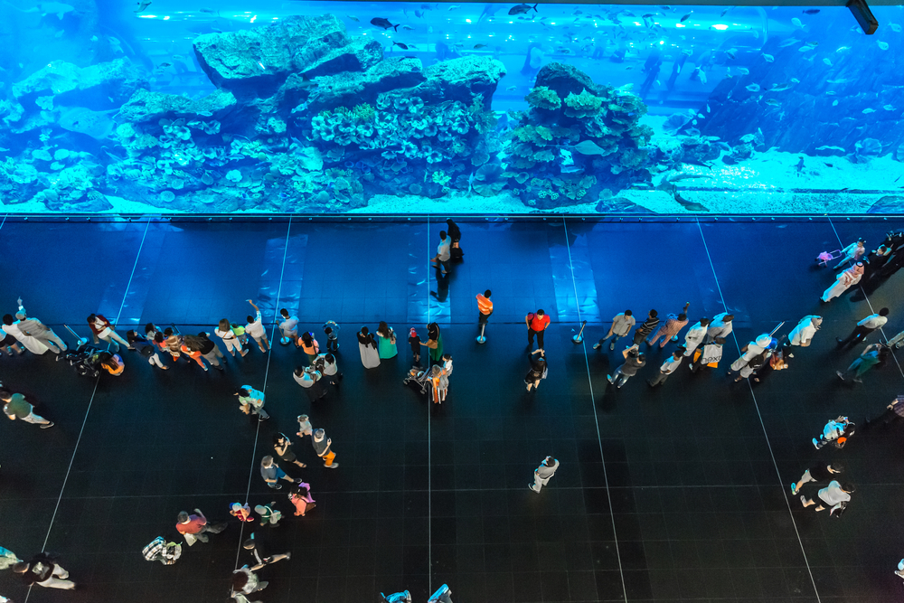 Aquarium inside the Dubai mall
