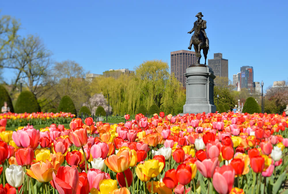 Tulips with the George Washington monument in Boston